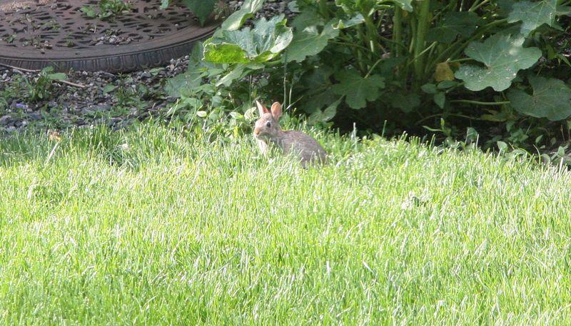 Bunny bunny1