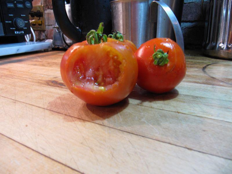 Squirrel raped tomato