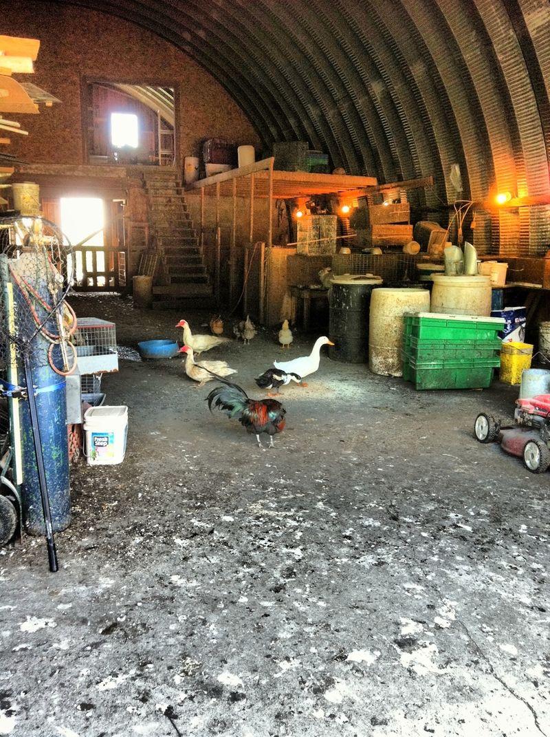 Joe cocker farm