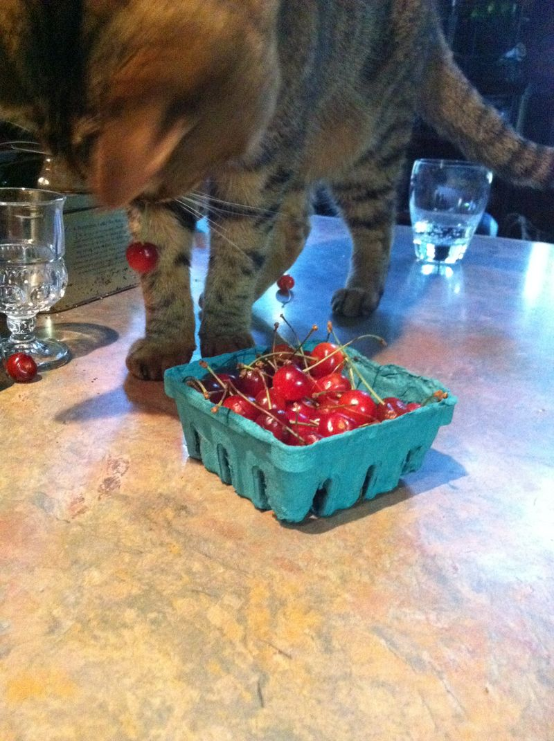 Stig the cherry thief